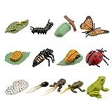 TOYANDONA 3 Juegos de Figuras de Insectos Figuras de Ciclo de Vida de Rana Mariquita Mariposa Niños de Educación Temprana Figuras de Animales Juguetes De Ciencia de La Biología
